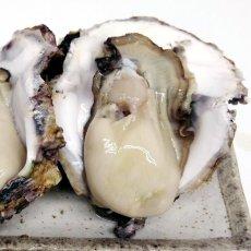 画像3: 三重的矢湾三ヶ所産 岩牡蠣 (3)