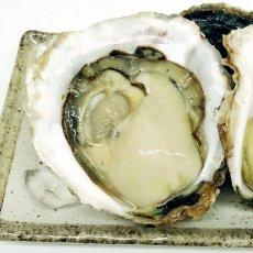 画像2: 三重的矢湾三ヶ所産 岩牡蠣 (2)