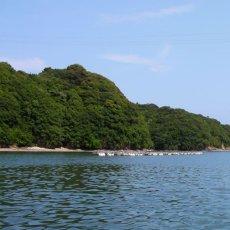 画像5: 三重的矢湾三ヶ所産 岩牡蠣 (5)
