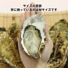 画像2: 三重答志島桃取産 桃こまち (2)