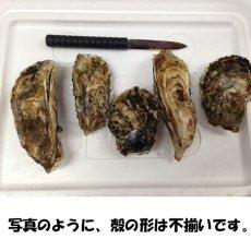 画像2: 三重答志島桃取産 ふぞろい牡蠣 (2)