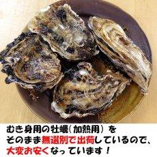 画像2: 【お急ぎ便】三重答志島桃取産 ふぞろい牡蠣 (お届け地域限定) (2)