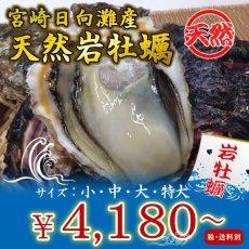 画像1: 宮崎日向灘産 天然岩牡蠣 (1)