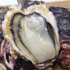 画像9: 宮崎日向灘産 天然岩牡蠣 (9)