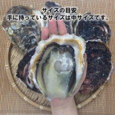 画像4: 宮崎日向灘産 天然岩牡蠣 (4)