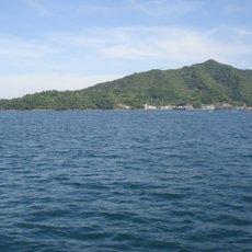 画像6: 宮崎日向灘産 天然岩牡蠣 (6)