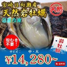 画像1: 宮崎日向灘産 天然岩牡蠣 (冷凍・生食用) (1)