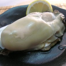 画像10: 石川能登産 天然岩牡蠣 (10)