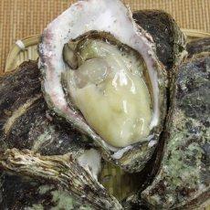 画像6: 石川能登産 天然岩牡蠣 (6)