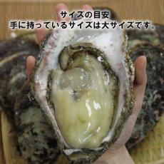 画像5: 石川能登産 天然岩牡蠣 (5)