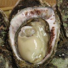 画像4: 石川能登産 天然岩牡蠣 (4)