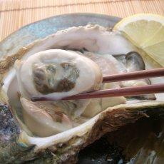 画像7: 石川能登産 天然岩牡蠣 (7)