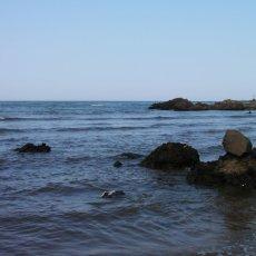 画像9: 石川能登産 天然岩牡蠣 (9)