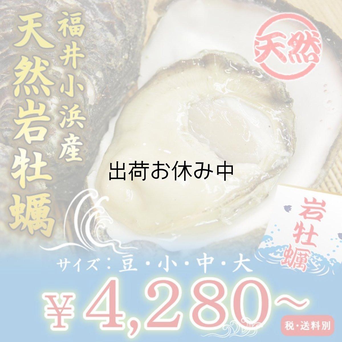 画像1: 福井小浜産 天然岩牡蠣 (1)