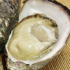 画像7: 福井小浜産 天然岩牡蠣 (7)
