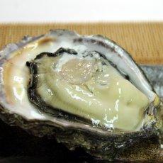 画像6: 福井小浜産 天然岩牡蠣 (6)