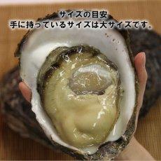 画像5: 福井小浜産 天然岩牡蠣 (5)