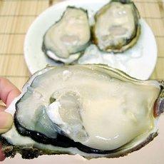 画像2: 福井小浜産 天然岩牡蠣 (2)