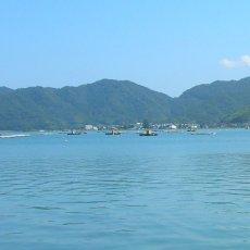 画像9: 福井小浜産 天然岩牡蠣 (9)