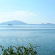 画像8: 福井小浜産 天然岩牡蠣 (8)