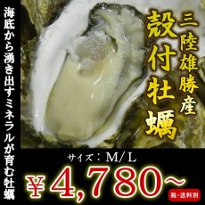 画像1: 三陸雄勝産 殻付牡蠣 (1)