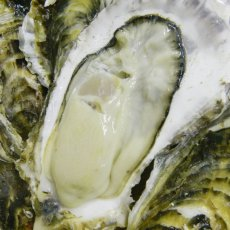画像6: 三陸雄勝産 殻付牡蠣 (6)