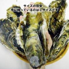 画像5: 三陸雄勝産 殻付牡蠣 (5)