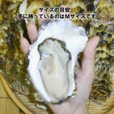 画像4: 三陸雄勝産 殻付牡蠣 (4)