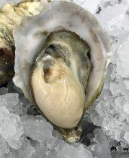 画像3: 三陸女川産 シングルシード牡蠣 (3)