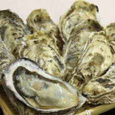 画像6: 北海道温根沼産 殻付牡蠣 (6)
