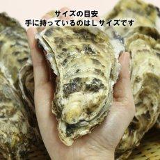 画像5: 北海道温根沼産 殻付牡蠣 (5)