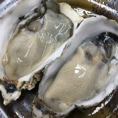 画像4: 北海道温根沼産 殻付牡蠣 (4)