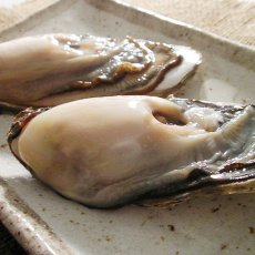 画像3: 北海道温根沼産 殻付牡蠣 (3)
