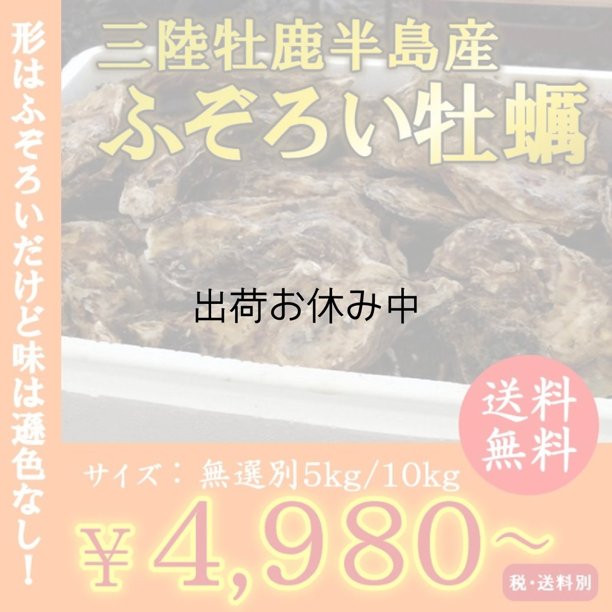 画像1: お急ぎ便 三陸産ふぞろい牡蠣 (1)