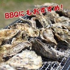 画像2: 三陸牡鹿半島産 ふぞろい牡蠣 (2)