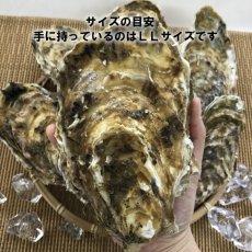 画像2: お急ぎ便 三陸産殻付牡蠣 (2)