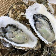 画像4: お急ぎ便 三陸産殻付牡蠣 (4)
