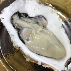 画像5: お急ぎ便 三陸産殻付牡蠣 (5)
