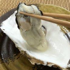 画像6: 三陸牡鹿半島産 殻付牡蠣 (6)