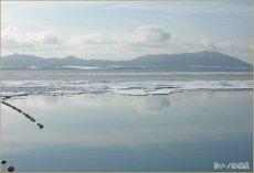 画像3: 北海道サロマ湖産 むき身牡蠣 (3)