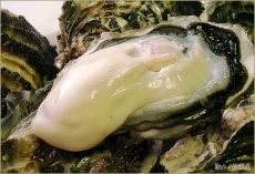 画像2: 北海道サロマ湖産 生食用牡蠣(むき身/殻付) (2)
