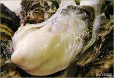 画像3: 北海道サロマ湖産 生食用牡蠣(むき身/殻付) (3)