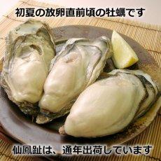 画像4: 北海道仙鳳趾産 殻付牡蠣 (4)