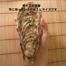 画像8: 北海道仙鳳趾産 殻付牡蠣 (8)
