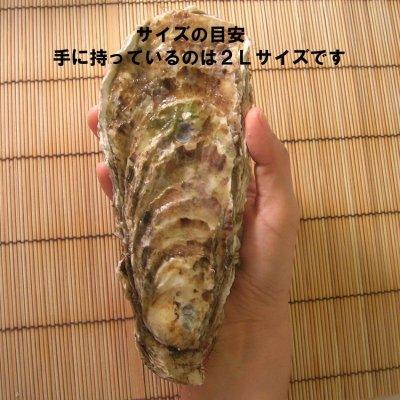 画像1: 北海道仙鳳趾産 殻付牡蠣