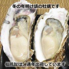 画像5: 北海道仙鳳趾産 殻付牡蠣 (5)