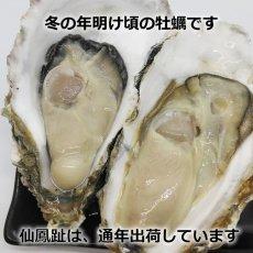 画像6: 北海道仙鳳趾産 殻付牡蠣 (6)