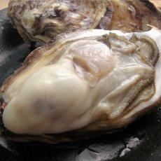 画像6: 三重白石湖産 牡蠣 渡利かき (6)