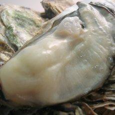 画像5: 三重白石湖産 牡蠣 渡利かき (5)