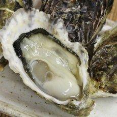 画像2: 三重白石湖産 牡蠣 渡利かき (2)